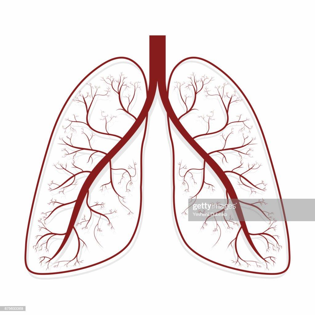Lungen Menschliche Lunge Anatomie Symbol Vektorgrafik | Getty Images