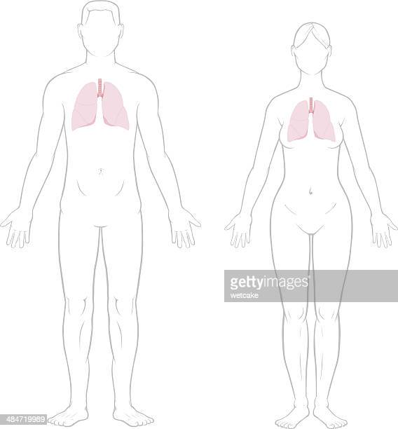 lungs - male and female - female likeness stock illustrations