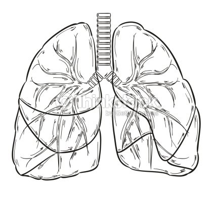 lungs sketch pulmones boceto arte vectorial thinkstock 8716