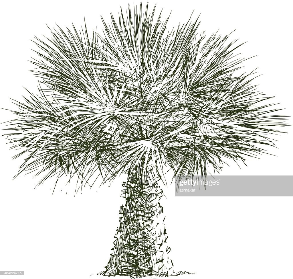 lush palm tree