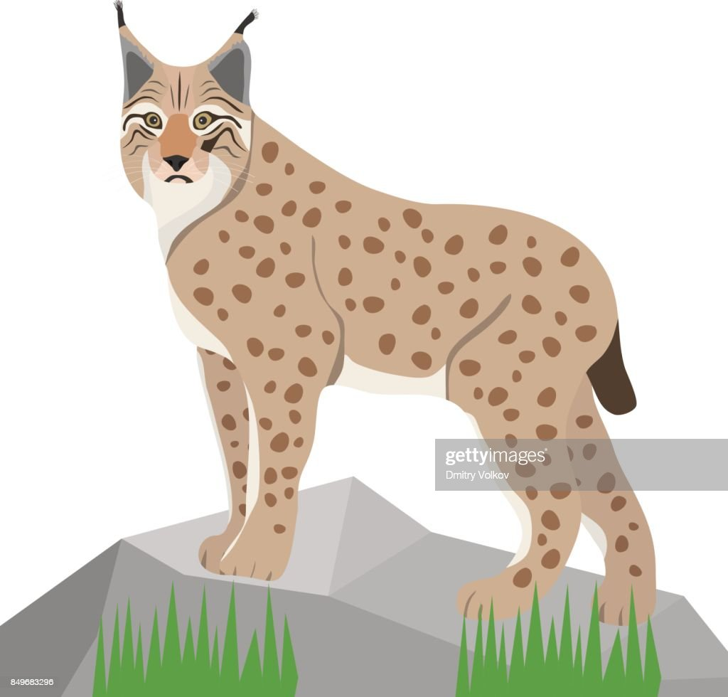 Lynx on white background, realistic lynx on stone.