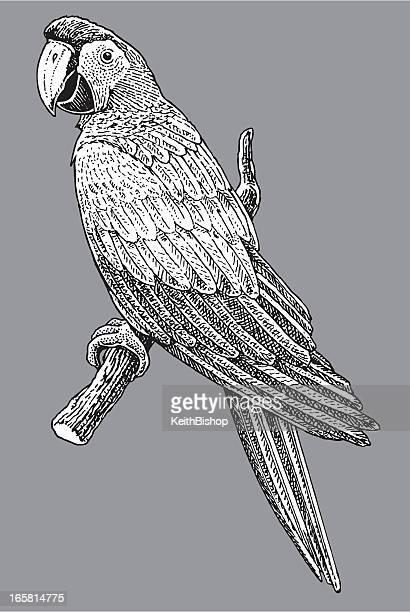 Oiseau Ara perroquet