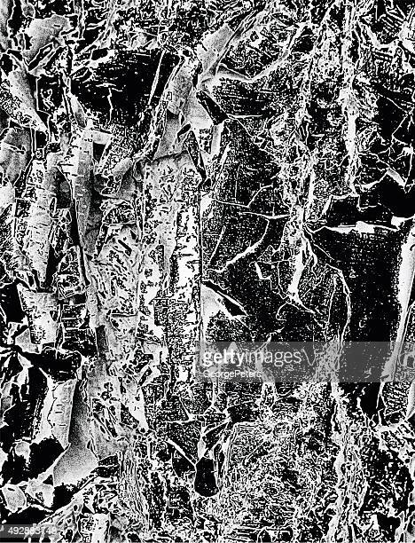 macro birch bark textured background in infrared style - tree bark stock illustrations, clip art, cartoons, & icons