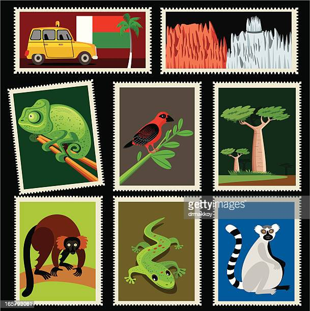 illustrations, cliparts, dessins animés et icônes de timbres de madagascar - baobab