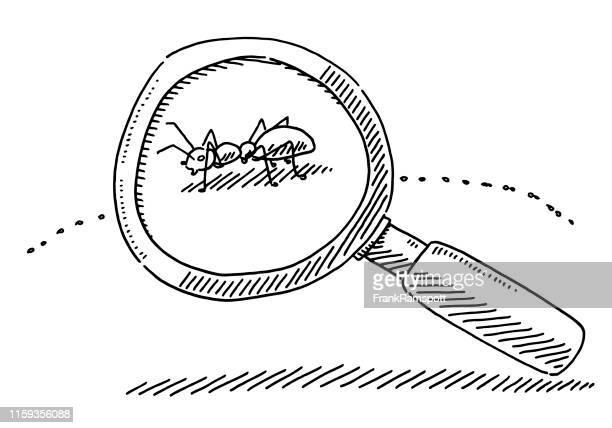 ilustraciones, imágenes clip art, dibujos animados e iconos de stock de dibujo de símbolo de ant de lupa - hormiga