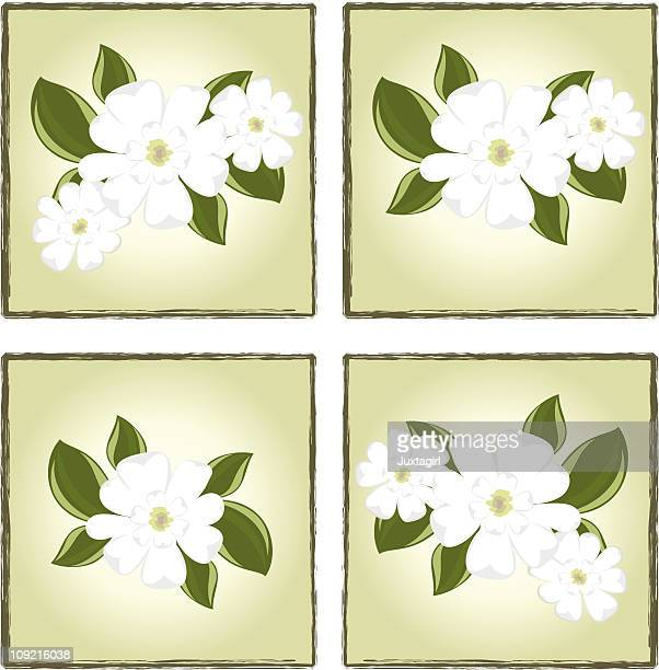 magnolia boxes - flowering trees stock illustrations, clip art, cartoons, & icons
