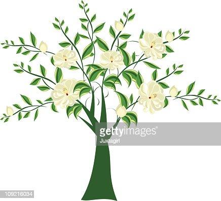 Magnolia Tree Stock Illustration Getty Images