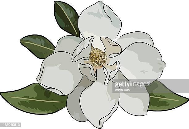 magnolia (vector) - blossom stock illustrations, clip art, cartoons, & icons