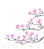 magnolia86