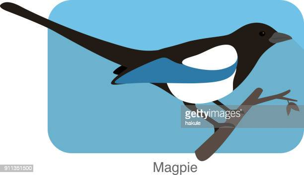 Magpie bird standing on a branch, vector illustration