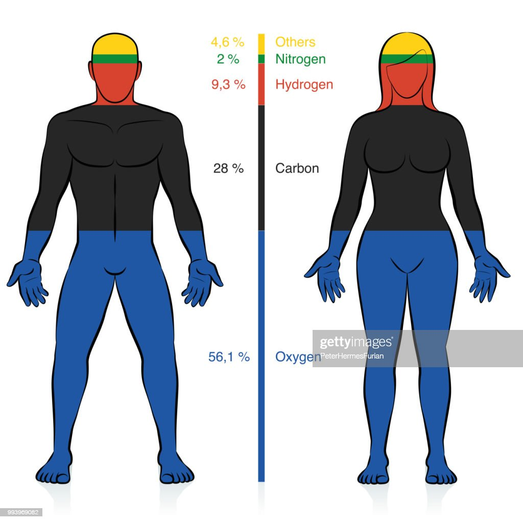 Main chemical elements of the human body. Oxygen, carbon, hydrogen, and nitrogen with percent of mass information that compose a normal weight man and woman. Abstract vector.
