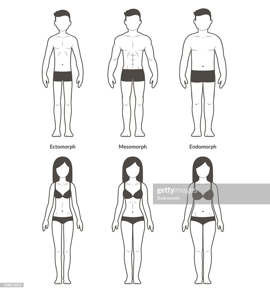 Male and female body types