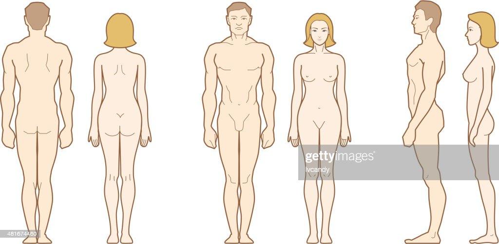 Männliche Und Weibliche Körper Vektorgrafik | Getty Images