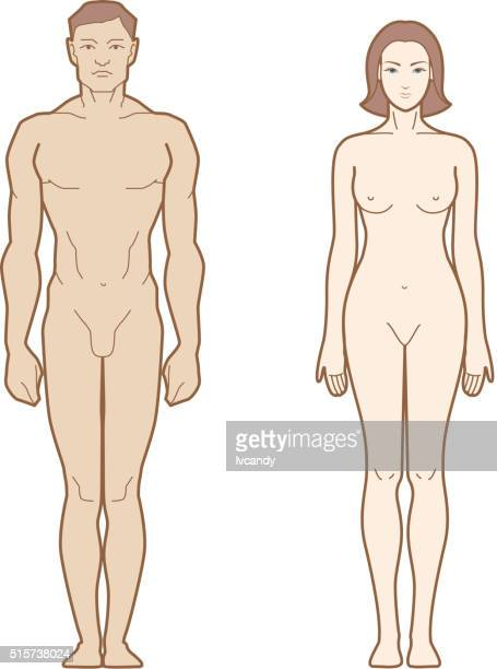 Männliche und weibliche Körper