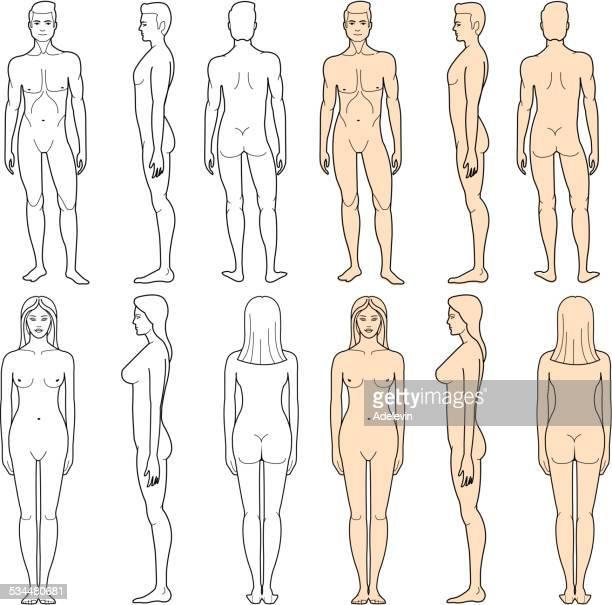 ilustraciones, imágenes clip art, dibujos animados e iconos de stock de cuerpo macho y hembra - cuerpo humano