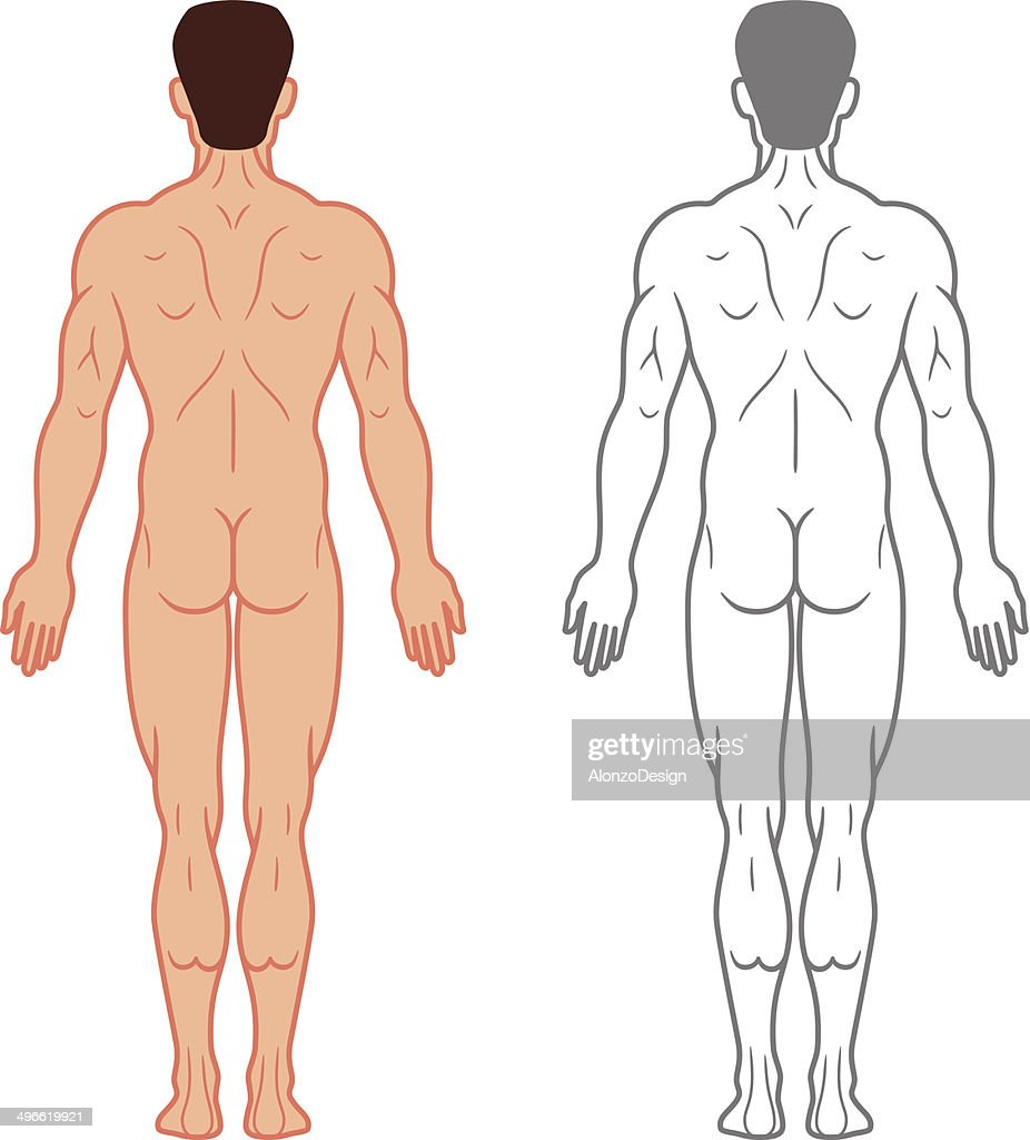 Male Body Back View Vector Art   Getty Images