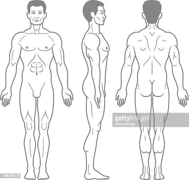 male body front, side and back view - chest torso stock illustrations, clip art, cartoons, & icons