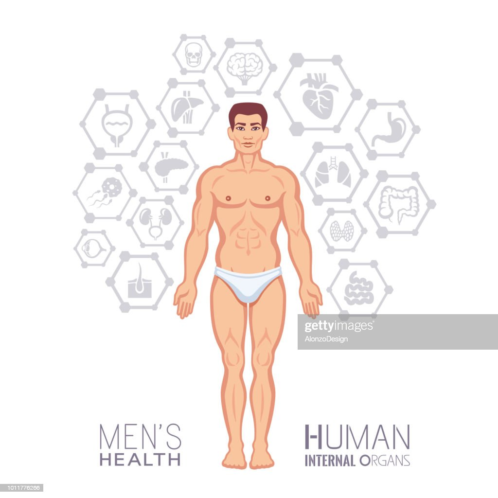 Male Body Human Internal Organ Icons Vector Art | Getty Images