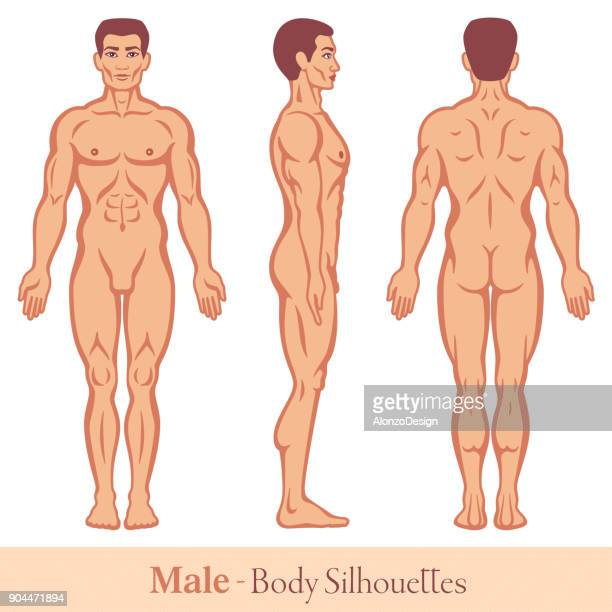 male body silhouettes - male likeness stock illustrations
