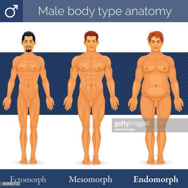 male body type anatomy - body building stock illustrations, clip art, cartoons, & icons