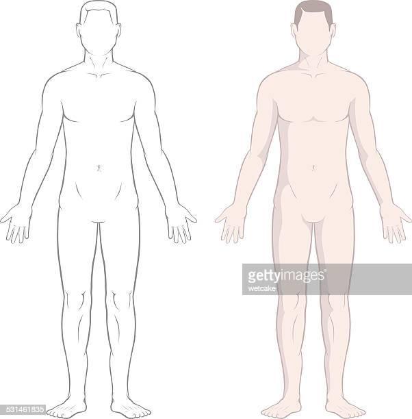 ilustrações, clipart, desenhos animados e ícones de corpo masculino - corpo humano
