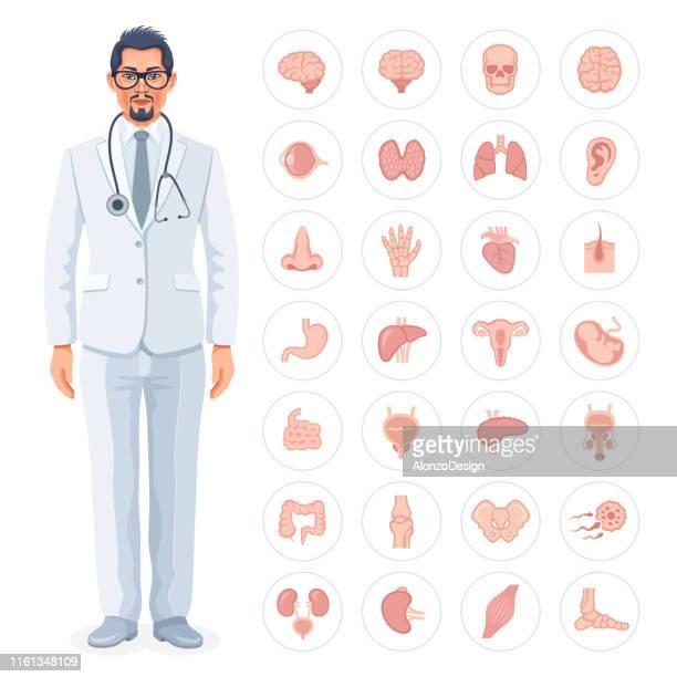 男性医師と人間の内臓アイコン - 人の肝臓点のイラスト素材/クリップアート素材/マンガ素材/アイコン素材