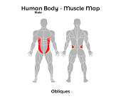 Male Human Body - Muscle map, Obliques