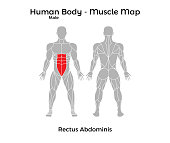 Male Human Body - Muscle map, Rectus Abdominis