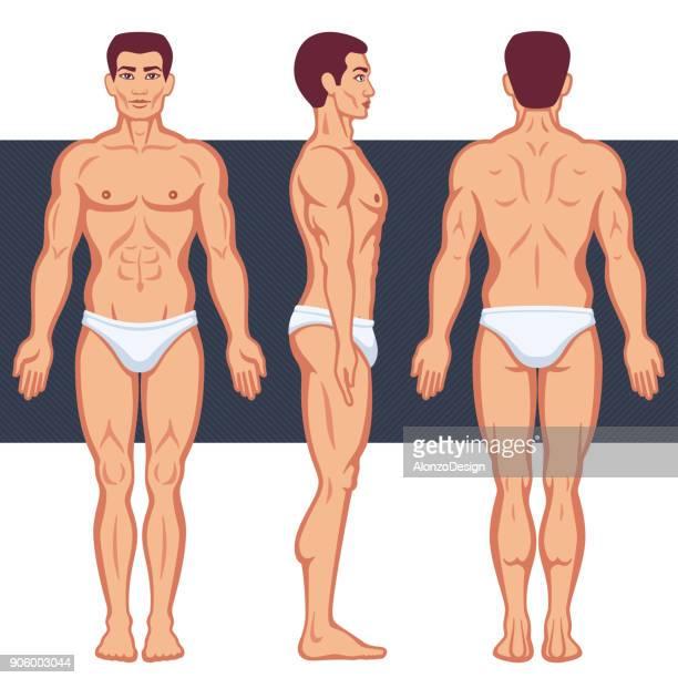 ilustraciones, imágenes clip art, dibujos animados e iconos de stock de cuerpo humano masculino - miembro humano