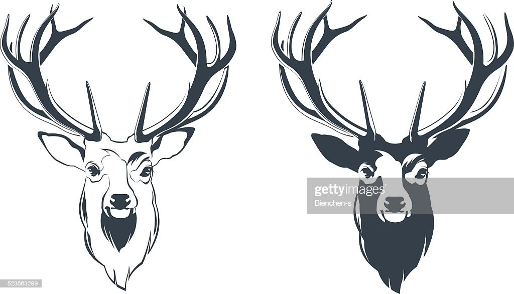 Male Red Deer Head