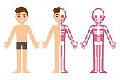 Male skeleton anatomy