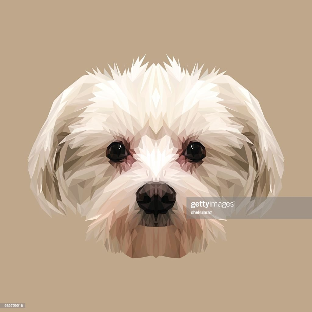 Maltese dog animal low poly design.