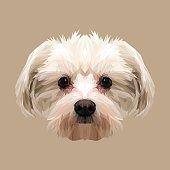 Maltese dog animal low poly design.