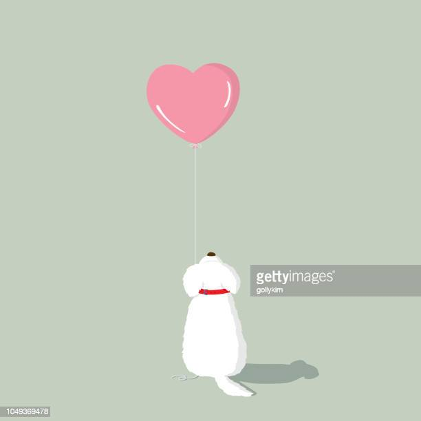 Maltese puppy with pink heart shape helium balloon