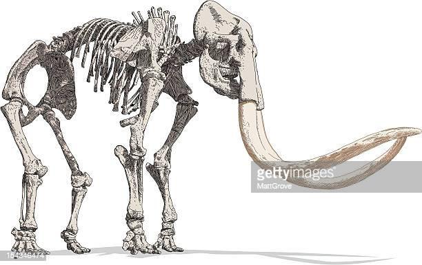 mammoth skeleton - animal skeleton stock illustrations, clip art, cartoons, & icons