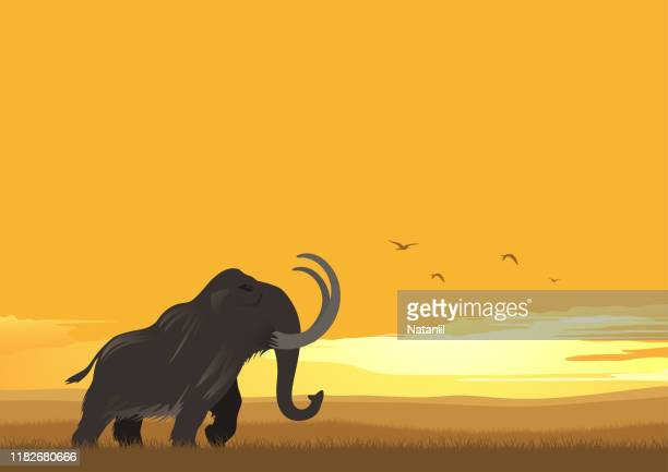 mammoth - images of mammoth stock illustrations