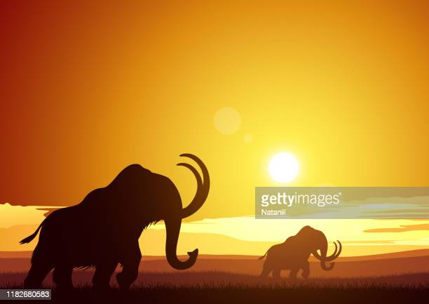 mammoths - ancient stock illustrations