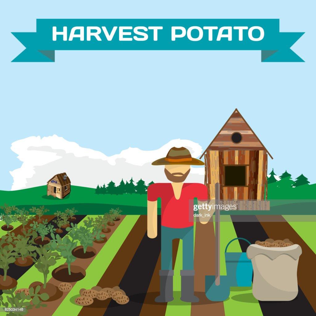 Man harvesting potato in a field in the village