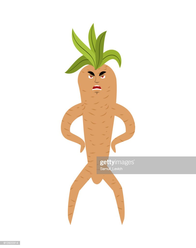 Mandrake root angry. Evil Legendary mystical plant in form of man.