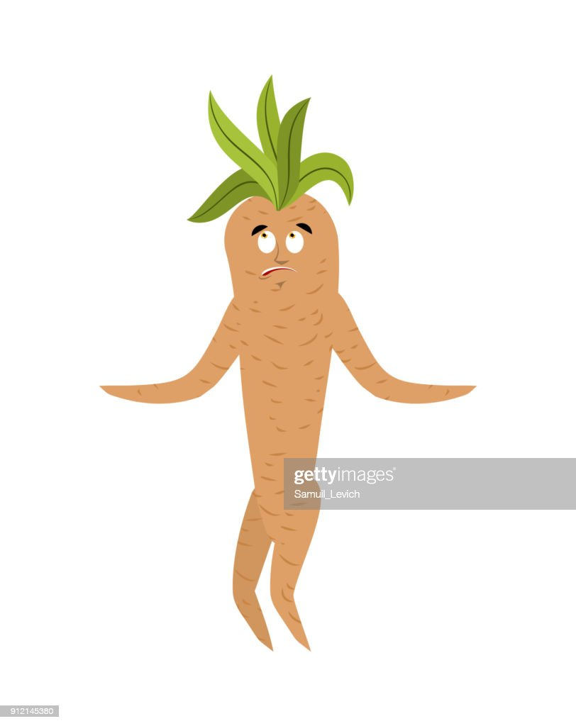 Mandrake root confused oops. Surprise Legendary mystical plant in form of man.