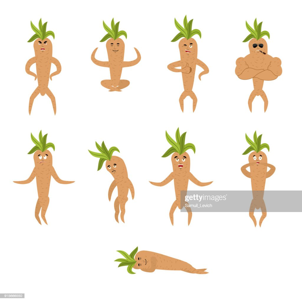 Mandrake root set poses and motion. Merry Legendary mystical plant in form of man. happy and yoga. sleeping and angry. guilty and sad