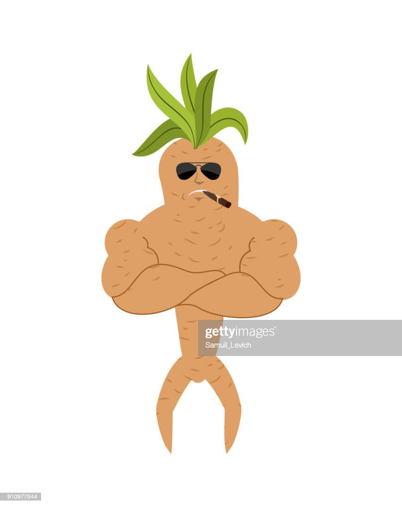 Mandrake root Strong Cool serious. Smoking cigar emotion Legendary mystical plant in form of man.