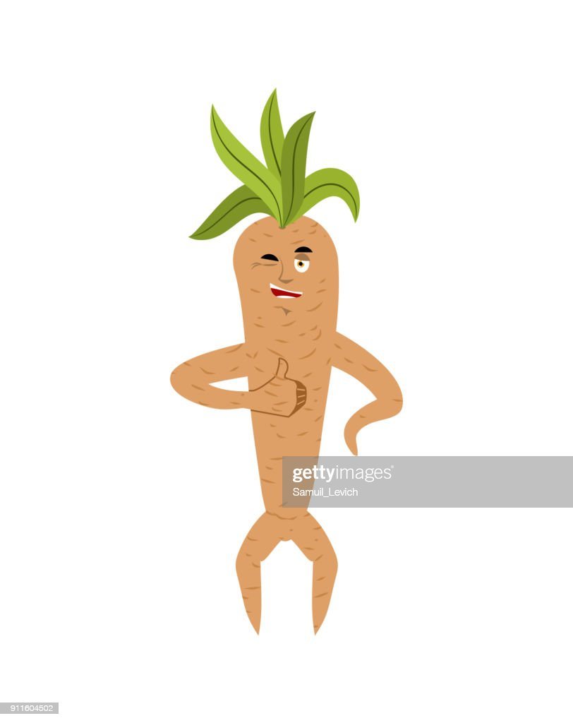 Mandrake root thumbs up and winks. Merry Legendary mystical plant in form of man.