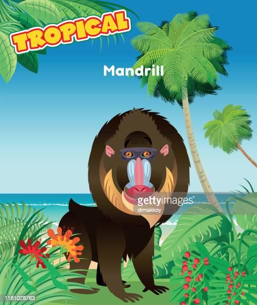 mandrill and summer - mandrill stock illustrations, clip art, cartoons, & icons