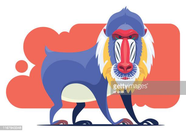 mandrill character - baboon stock illustrations