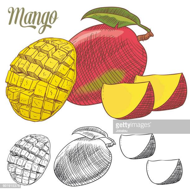 mango colorful doodle - mango fruit stock illustrations, clip art, cartoons, & icons