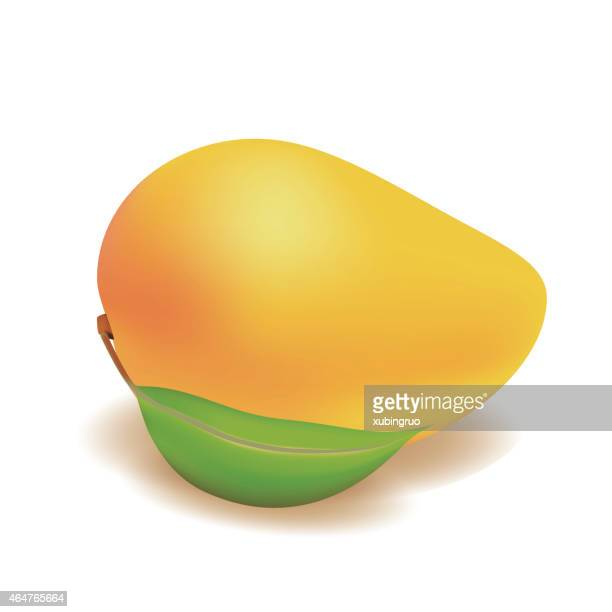 mango on a white background - mango fruit stock illustrations, clip art, cartoons, & icons