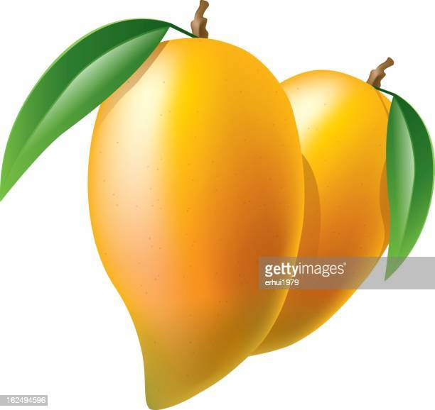mango - mango fruit stock illustrations, clip art, cartoons, & icons