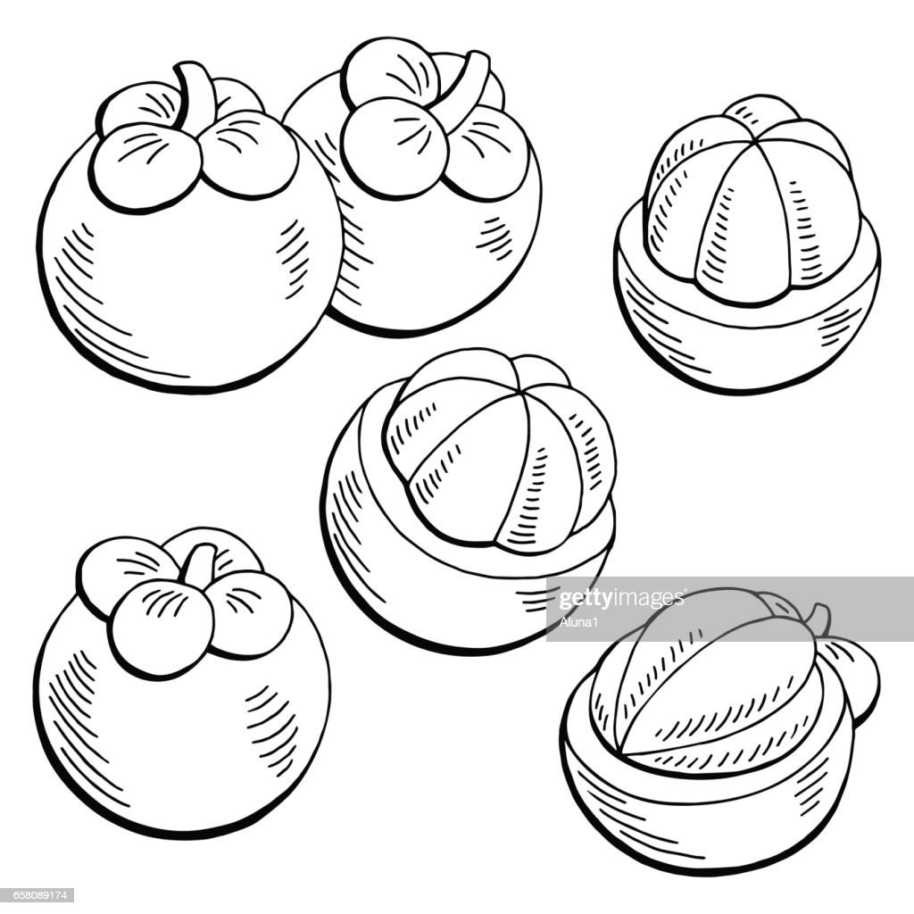 Mangosteen fruit graphic black white isolated sketch illustration vector