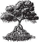 Mangrove Tree Ink Style Vector Cartoon Illustration